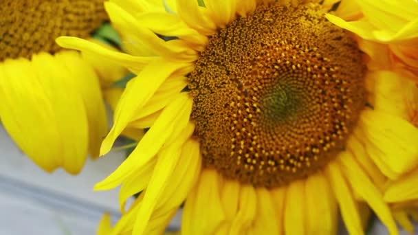 Virágzó napraforgó a szabadban Hd 1920x1080
