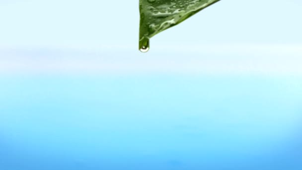 Drop Of Falling From Green Leaf