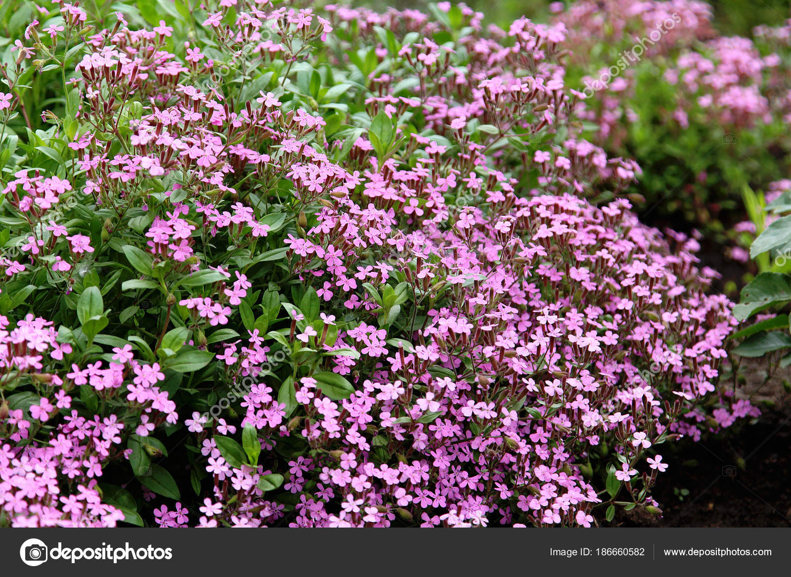 Variété Fleurs Dans Jardin — Photographie photosbelkina ...