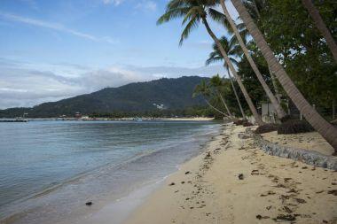 Palm trees on beach, Koh Samui, Surat Thani Province, Thailand
