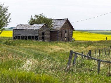 Abandoned barns at farm, Southern Alberta, Alberta, Canada