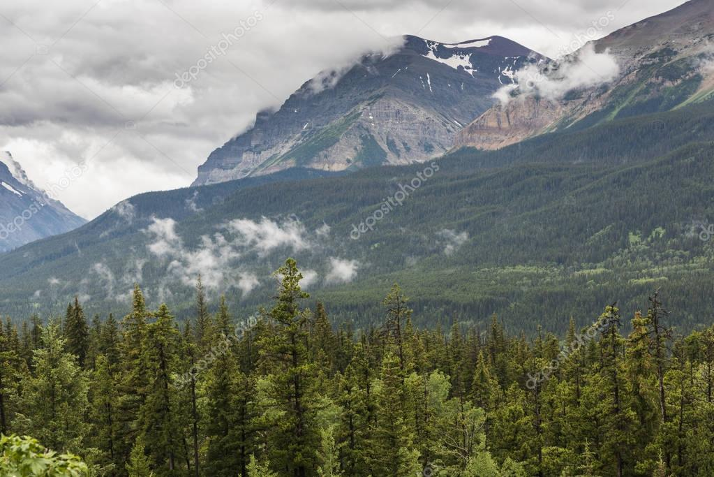 Scenic view of trees with mountains against cloudy sky, Waterton Lakes National Park, Southern Alberta, Alberta, Canada