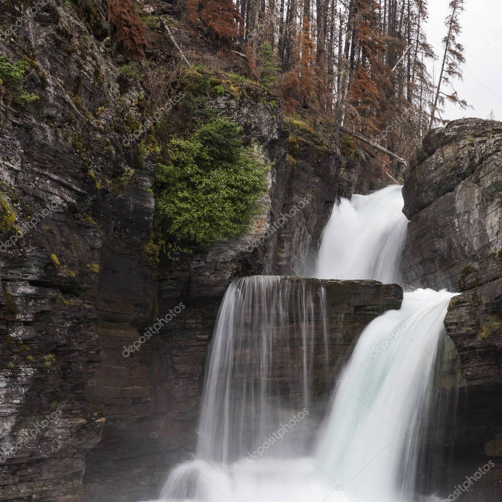 Water falling from rocks in a forest, St Mary Falls, Glacier National Park, Glacier County, Montana, USA