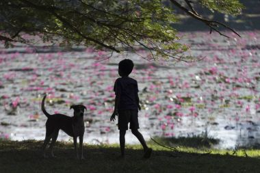 Rear view of boy standing on grass with dog, Krong Siem Reap, Siem Reap, Cambodia