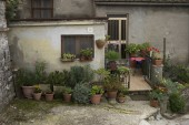 Potted plants outside a house, Chianti, Tuscany, Italy