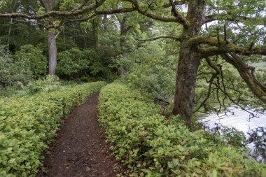 Pathway amidst trees in forest, Loch Oich, Great Glen, Scottish Highlands, Scotland