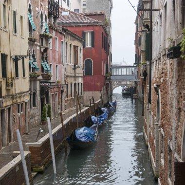 Gondolas in Grand Canal, Venice, Veneto, Italy