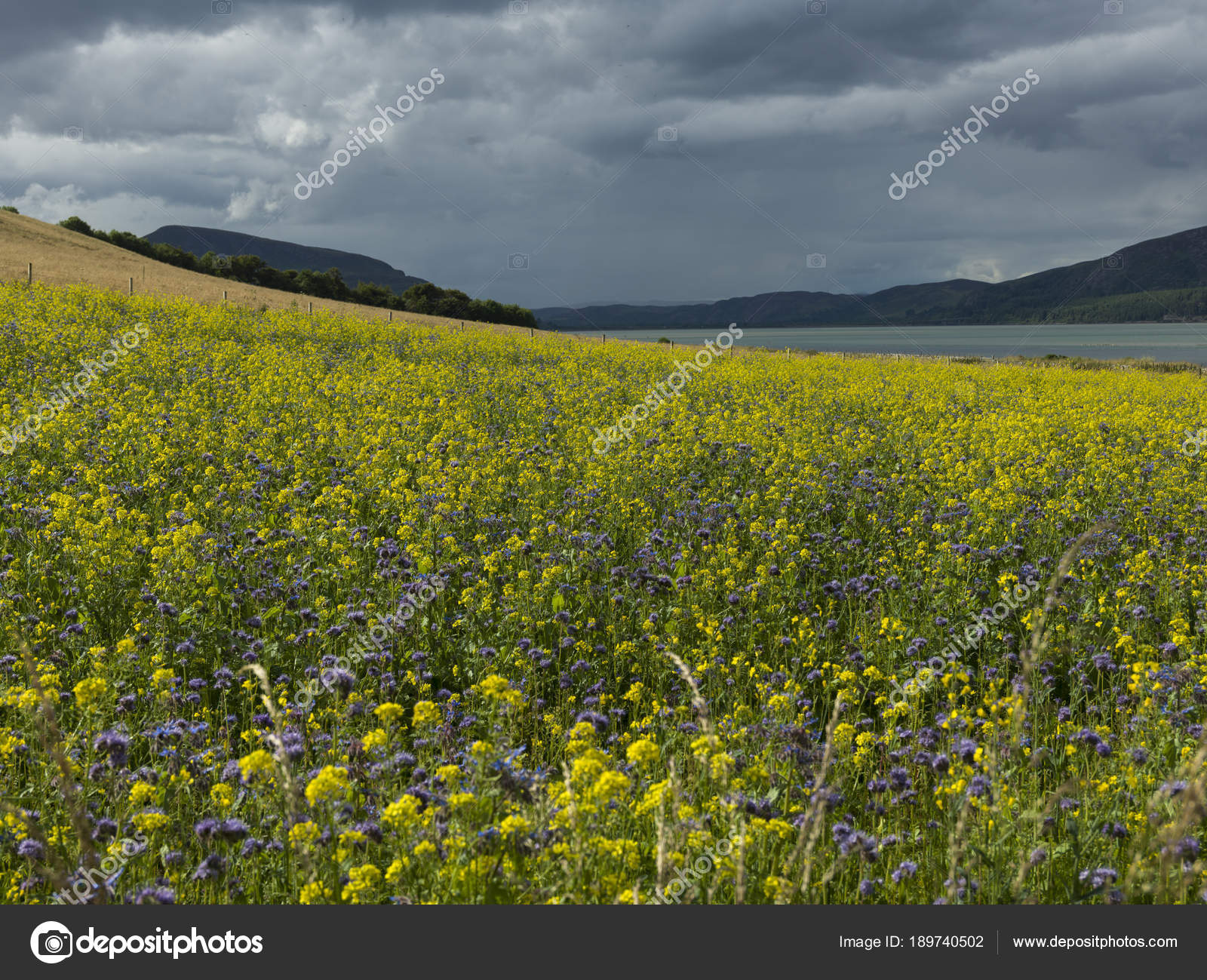 Field Flowers Bloom Coast Cloudy Sky Scottish Highlands Scotland