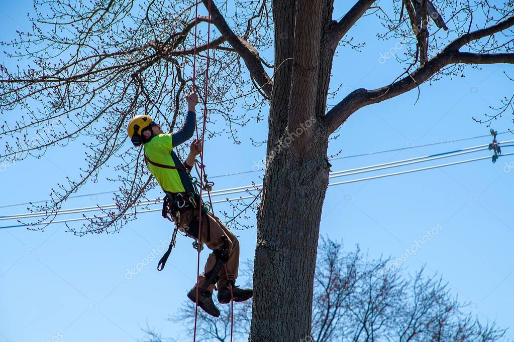 young man climbing rope in tree wearing safety equipment