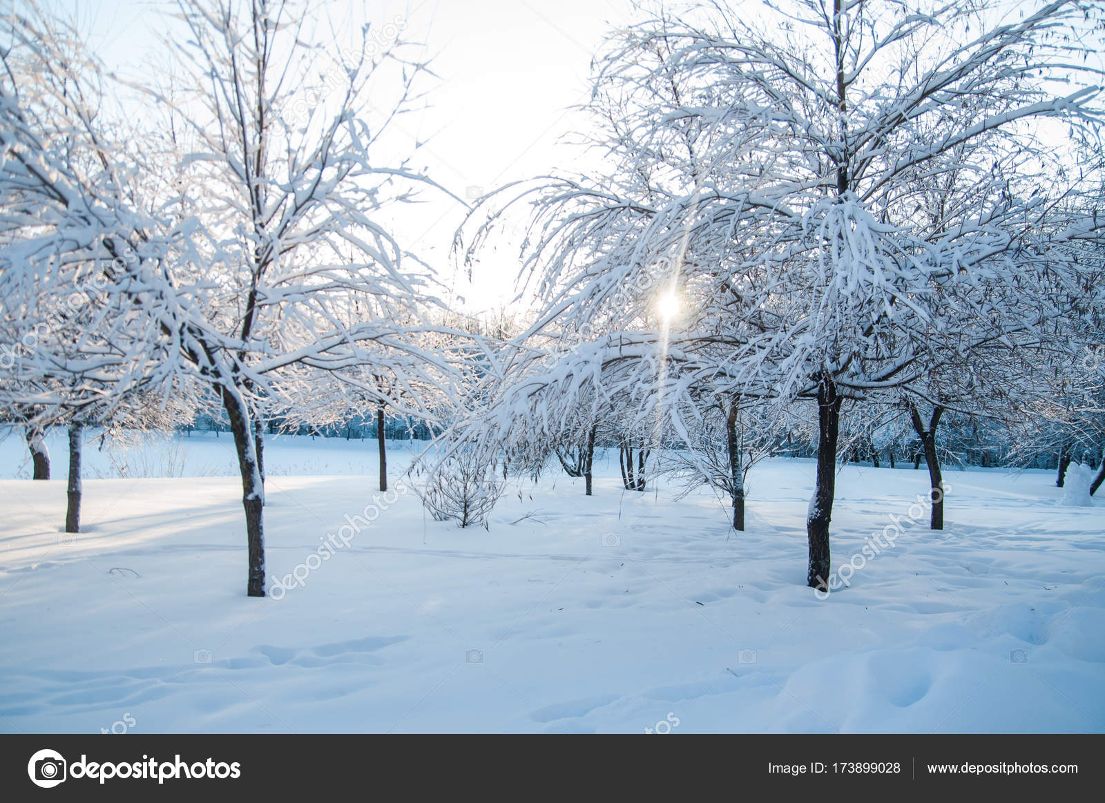 Beautiful winter forest with the setting sun  — Stock Photo