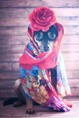 Dog with the red bandana and a rose on the head. Puppy in the fo