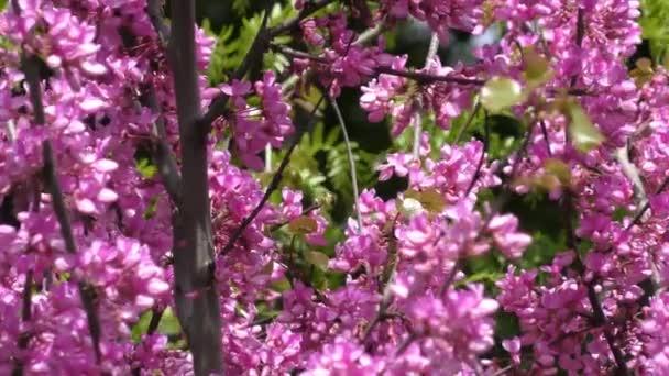 Keře šeřík. Jarní květiny