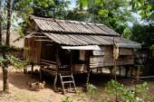 Casa di legno in foresta tropicale