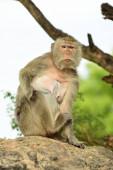 Affe sitzt auf dem Baum im Wald