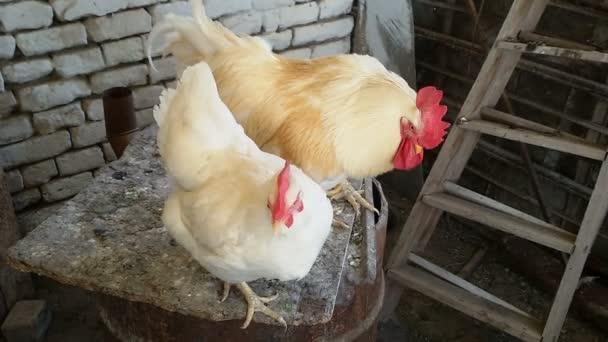 Gallo e gallina nel pollaio, Scena rurale