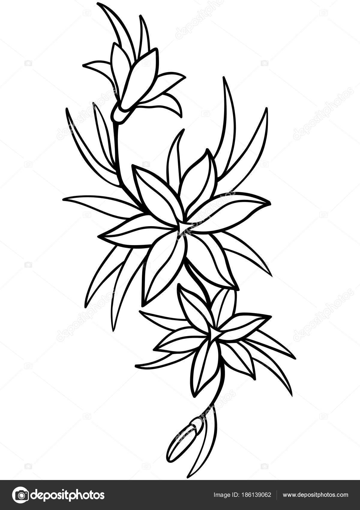Lirios Flores Con Hojas Dibujo Línea Para Colorear Vector De Stock