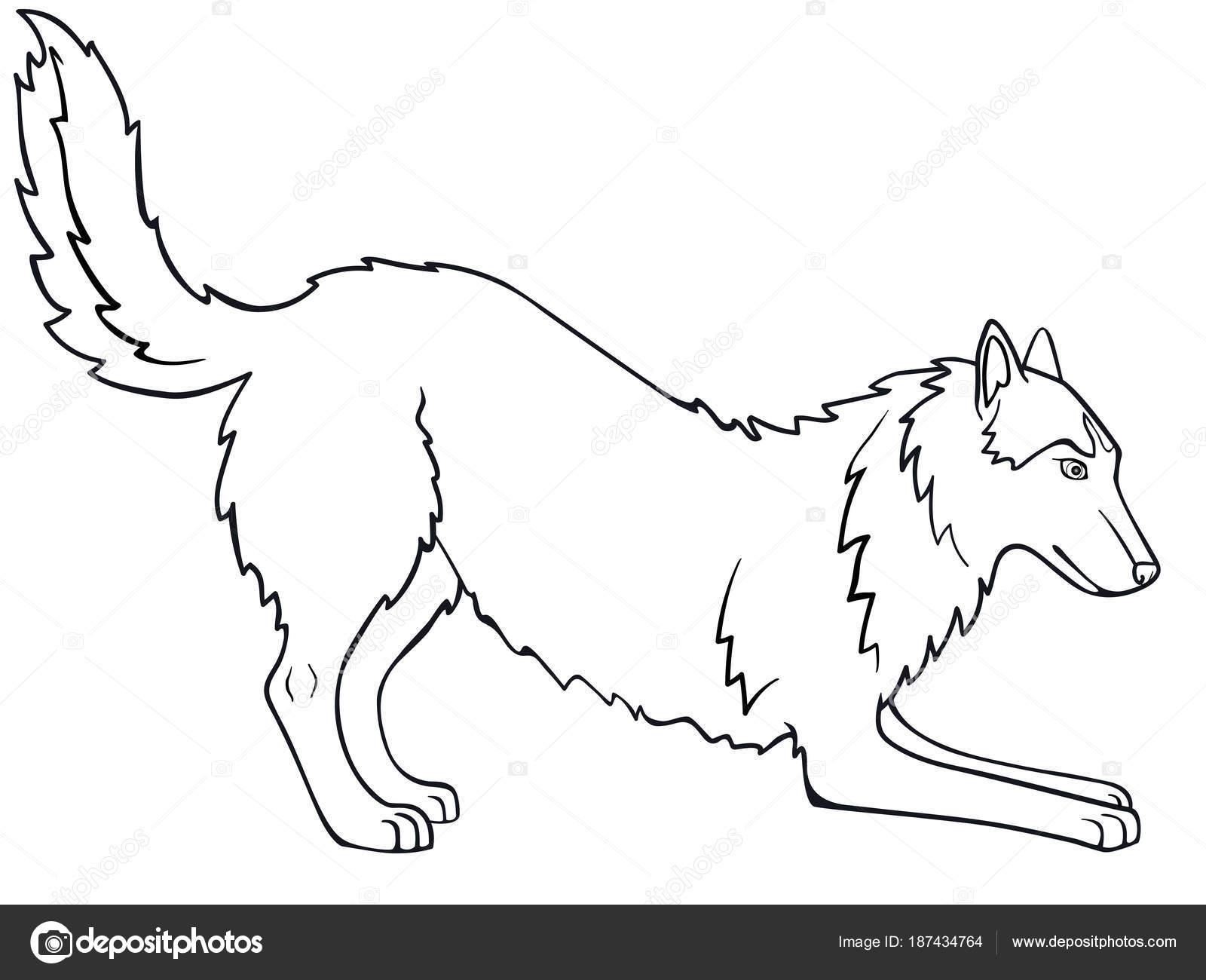Husky Siberiano Alaskan Malamute Perro Está Jugando Dibujo Línea ...