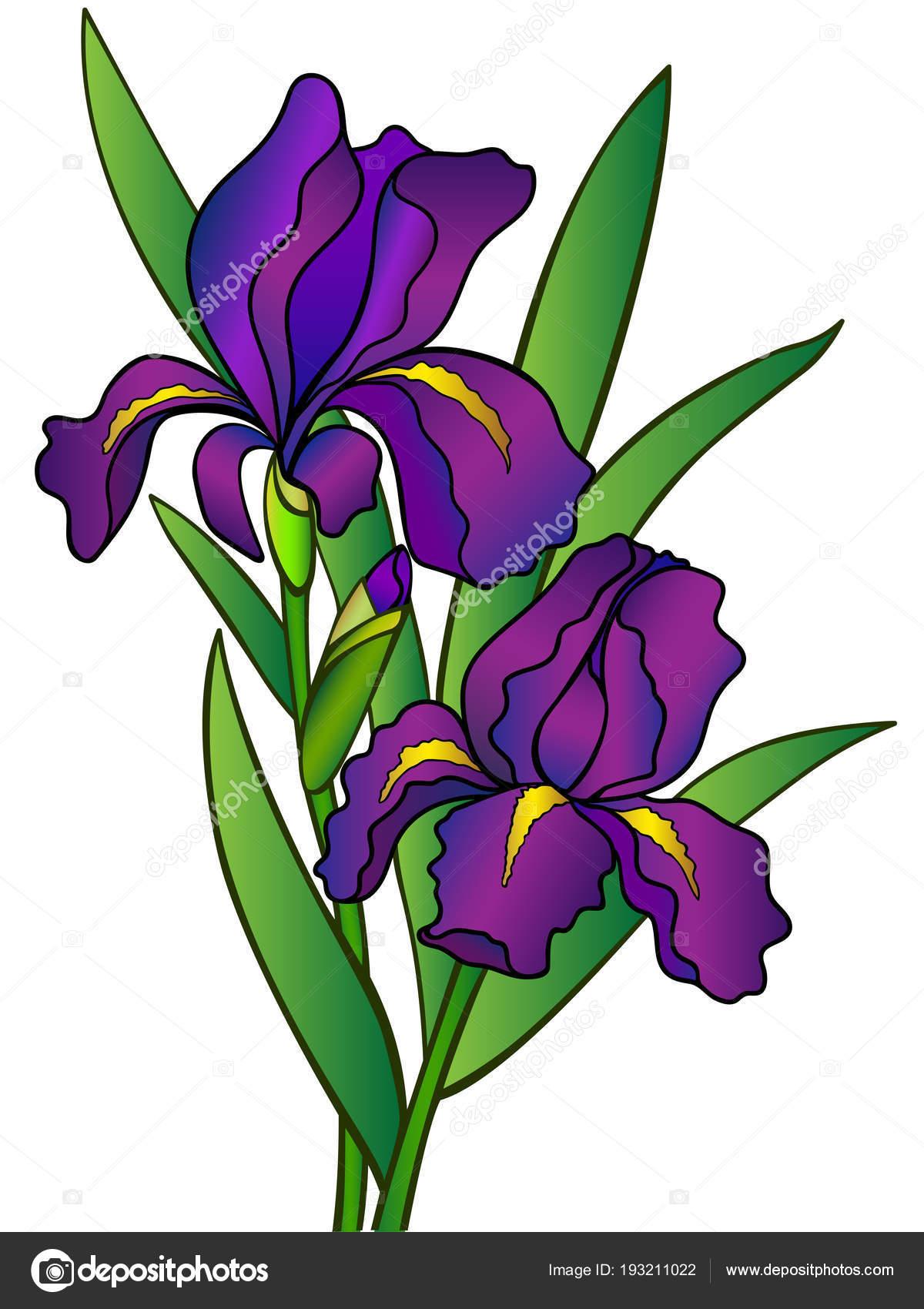 Dibujos Flores A Todo Color Iris Color Flores Hojas Iris Todo