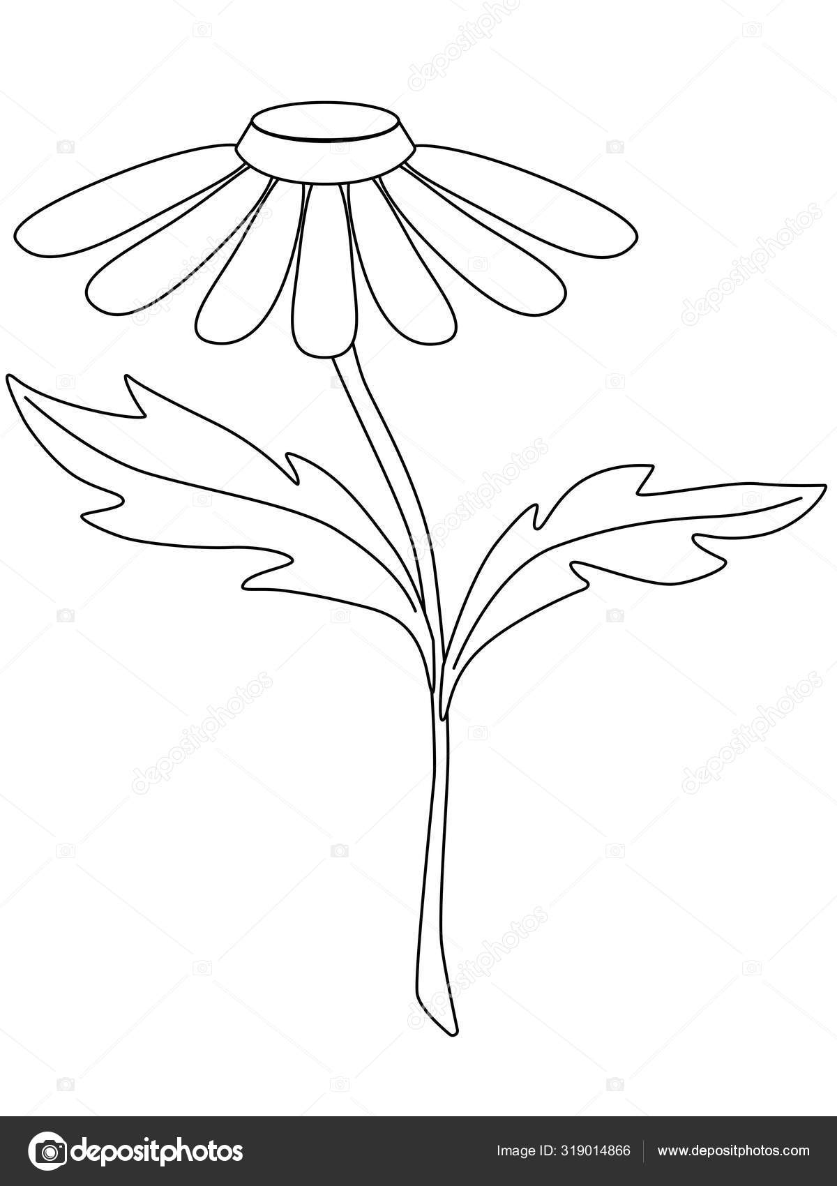 Chamomile Garden Chamomile Flower Stem Two Leaves Decorative Camomile Bouquets Stock Vector C Disaanna 319014866