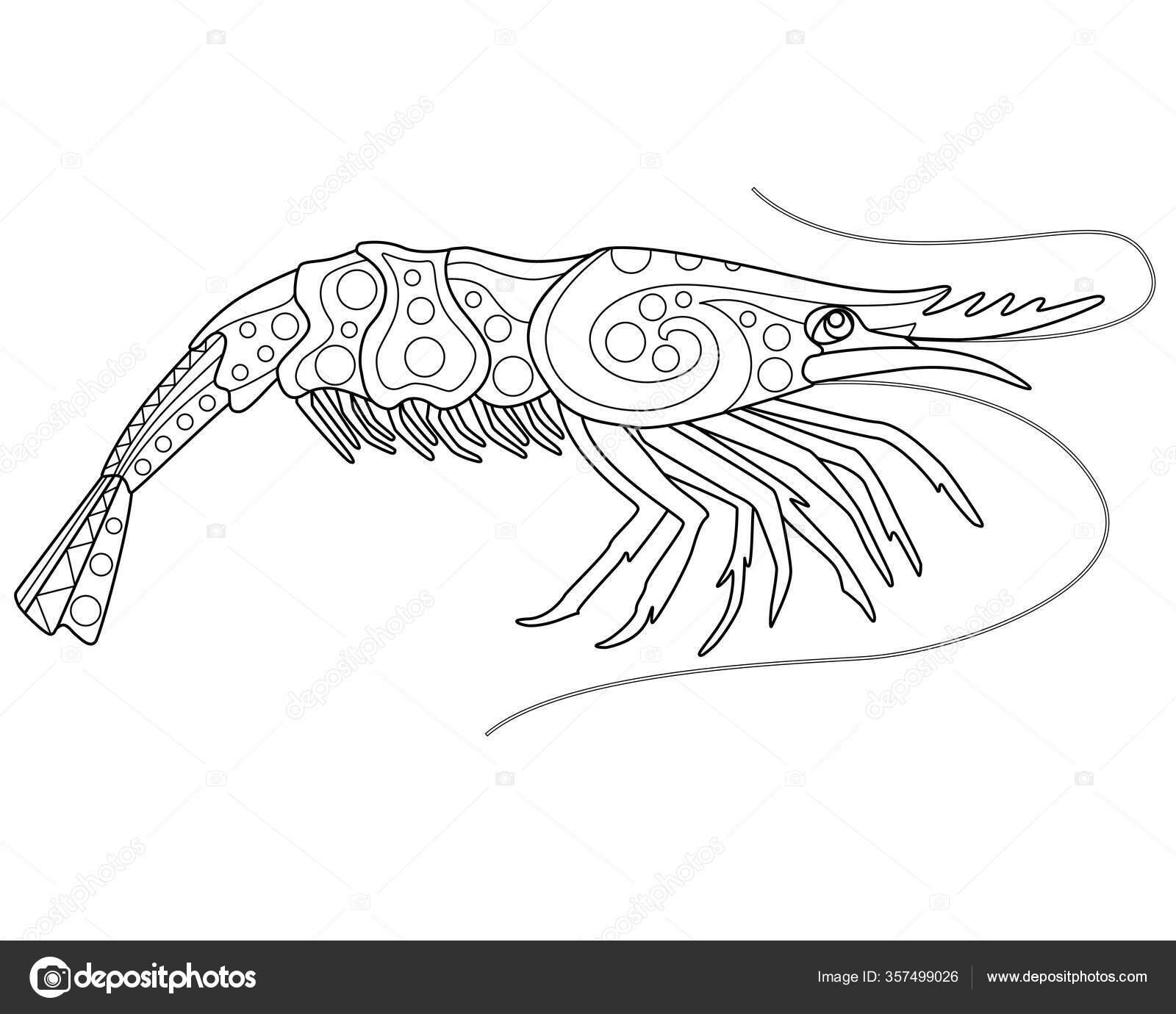 Krewetki Kolorowanki Antystresowe Wektor Liniowy Obraz Kolorowania Morskie Zwierze Krewetki Grafika Wektorowa C Disaanna 357499026