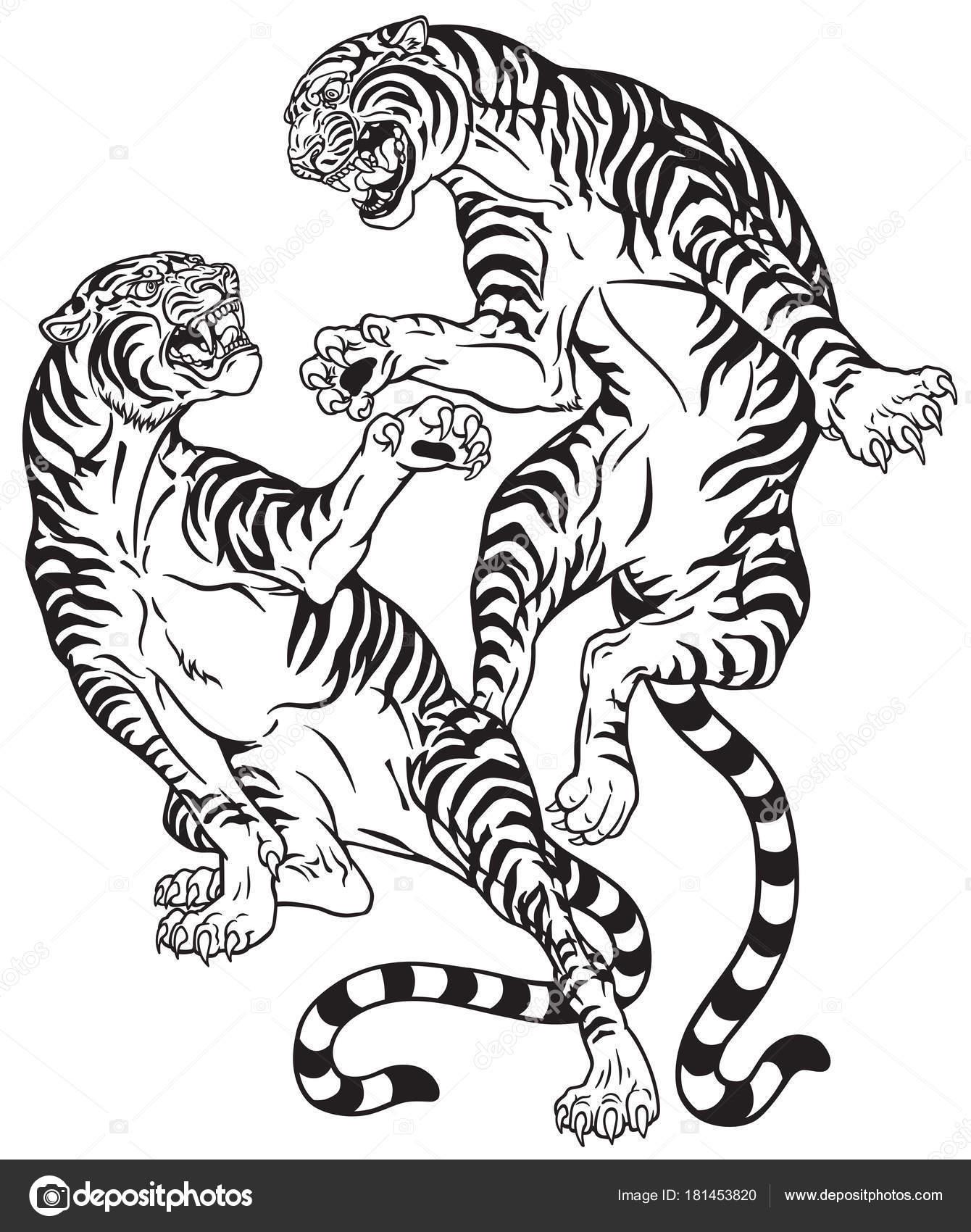 Imágenes Tigre Rugiendo Para Colorear Tigres Peleando Dos