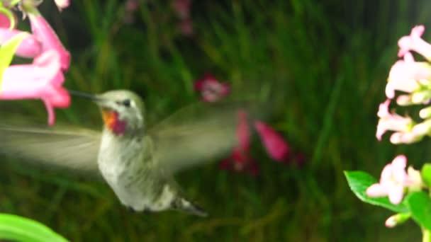 Kolibřík se náhle objeví mezi květy