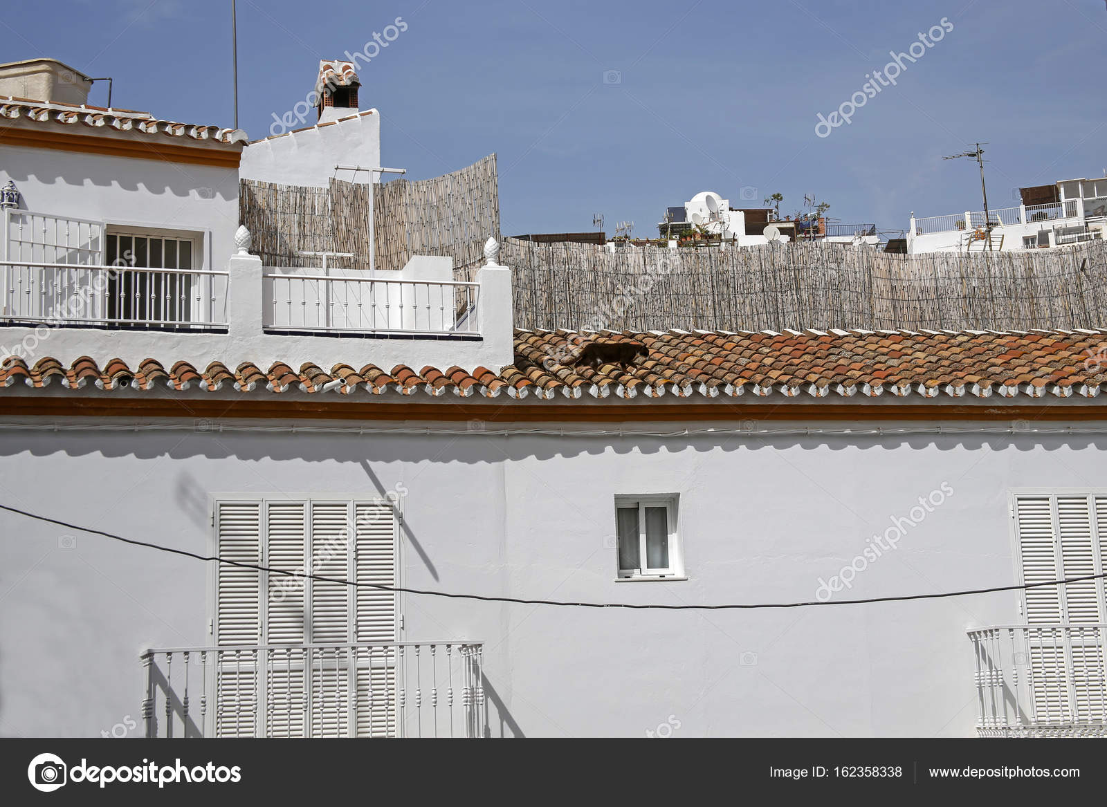 Czarny Kot Na Dachu Budynku Biały Zdjęcie Stockowe Chrupka
