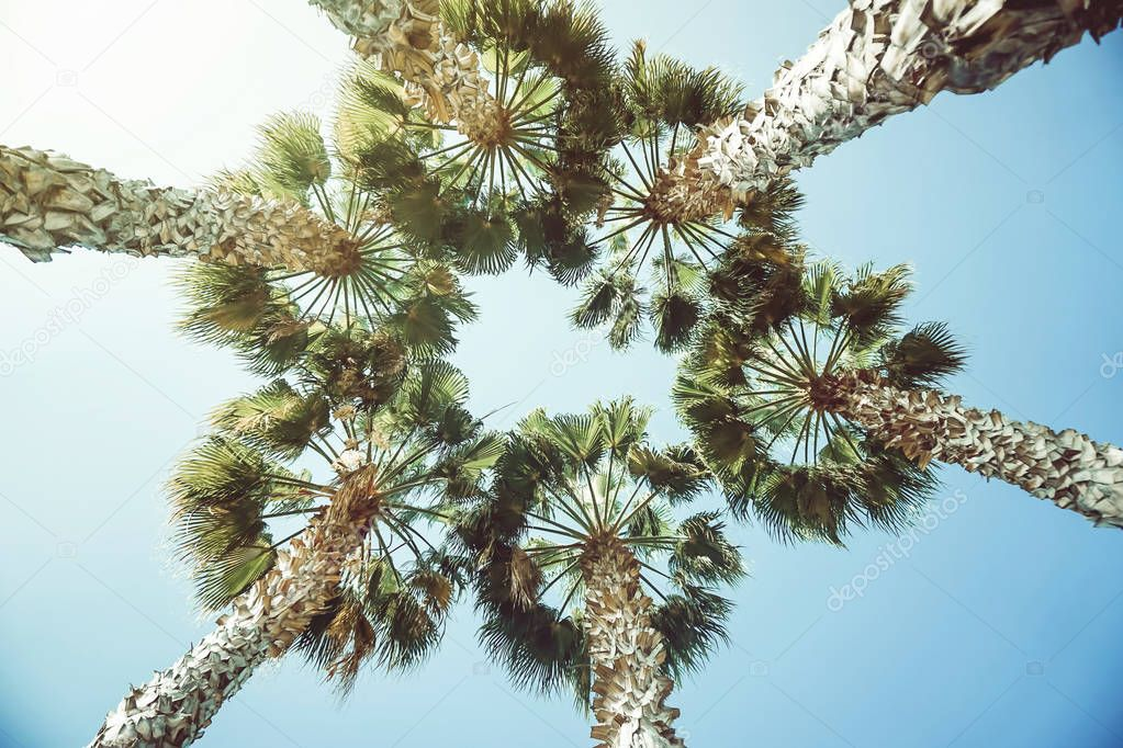 View from below of tropical tall palm trees in a form of circle on a sunny day - Summer, travel and vacation concept - vintage filter