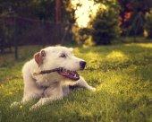 kutya játék kívül