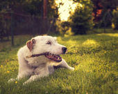 Dog Playing outside