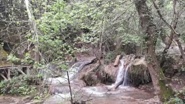Ormanın derinliklerindeki Turgut Şelalesi 'ne yakın. Güzel küçük turist şelalesi. Bir şelalenin içine düştüğü bir dere. Marmaris, Mugla - Türkiye.