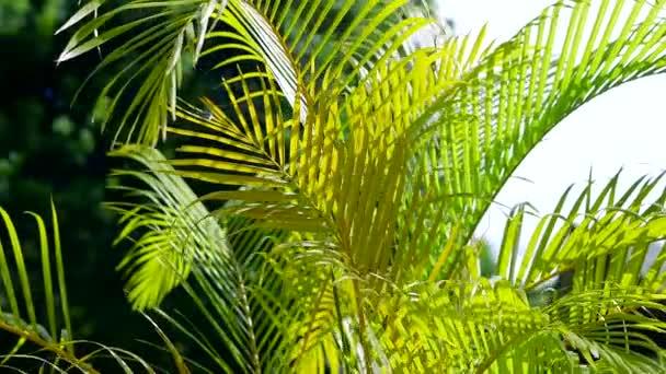 palmové listy proti obloze a příroda