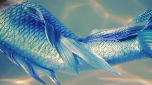detail. ve vodě plave štíhlounkou dívku v kostýmu mořská panna. žena s rybí ocas modrý