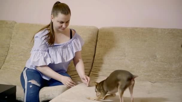 Portrait of a lovely woman sitting on a couch in casual clothes and playing with her small dog.