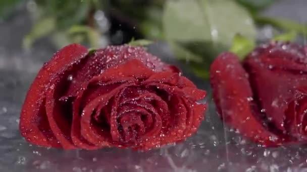 dva pupeny jasně červených růží je ležet v louži, kapky deště se kape na ně