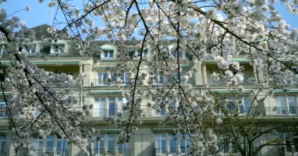 Közelkép egy fehér orgona ágról egy napsütéses napon, egy gyönyörű épület hátterében. Enyhén ringatóznak a könnyű szélben.