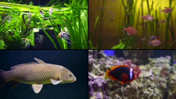 different kinds of fishes in aquariums, four shots collage