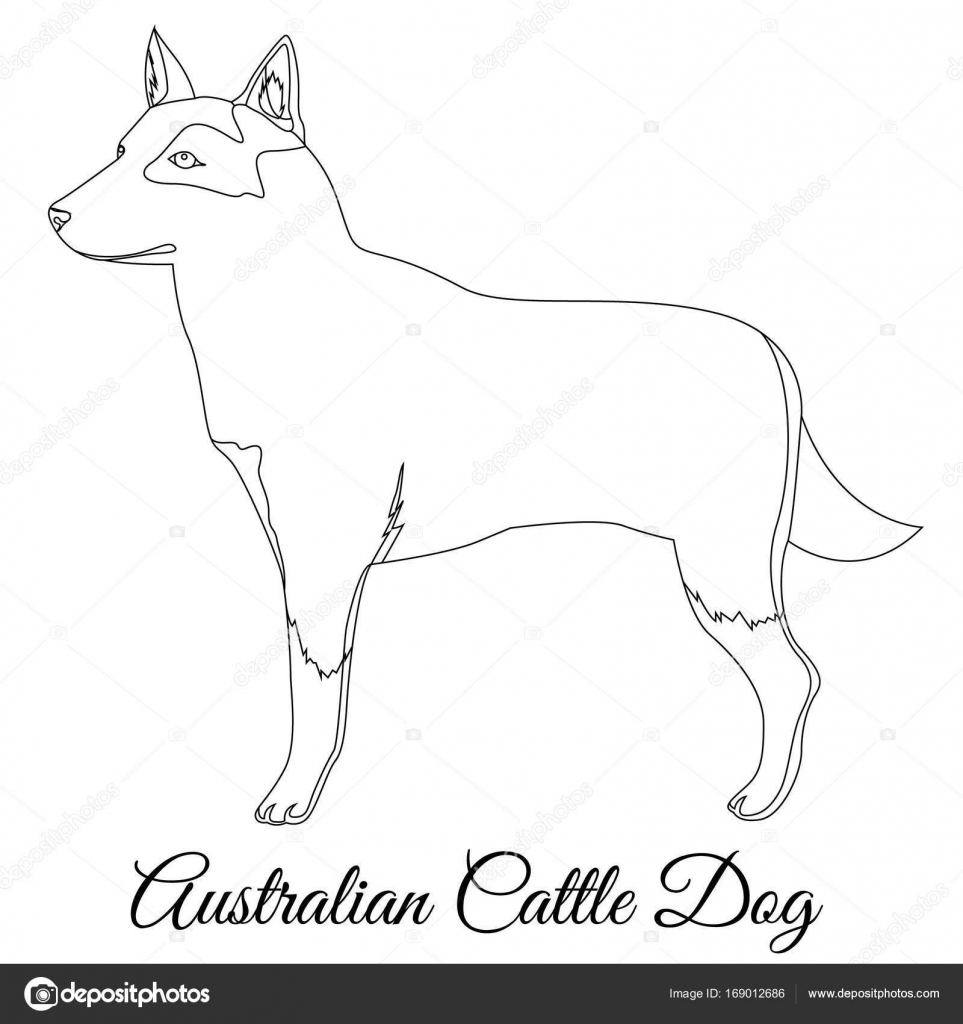 australian cttle dog outline u2014 stock vector marishayu 169012686