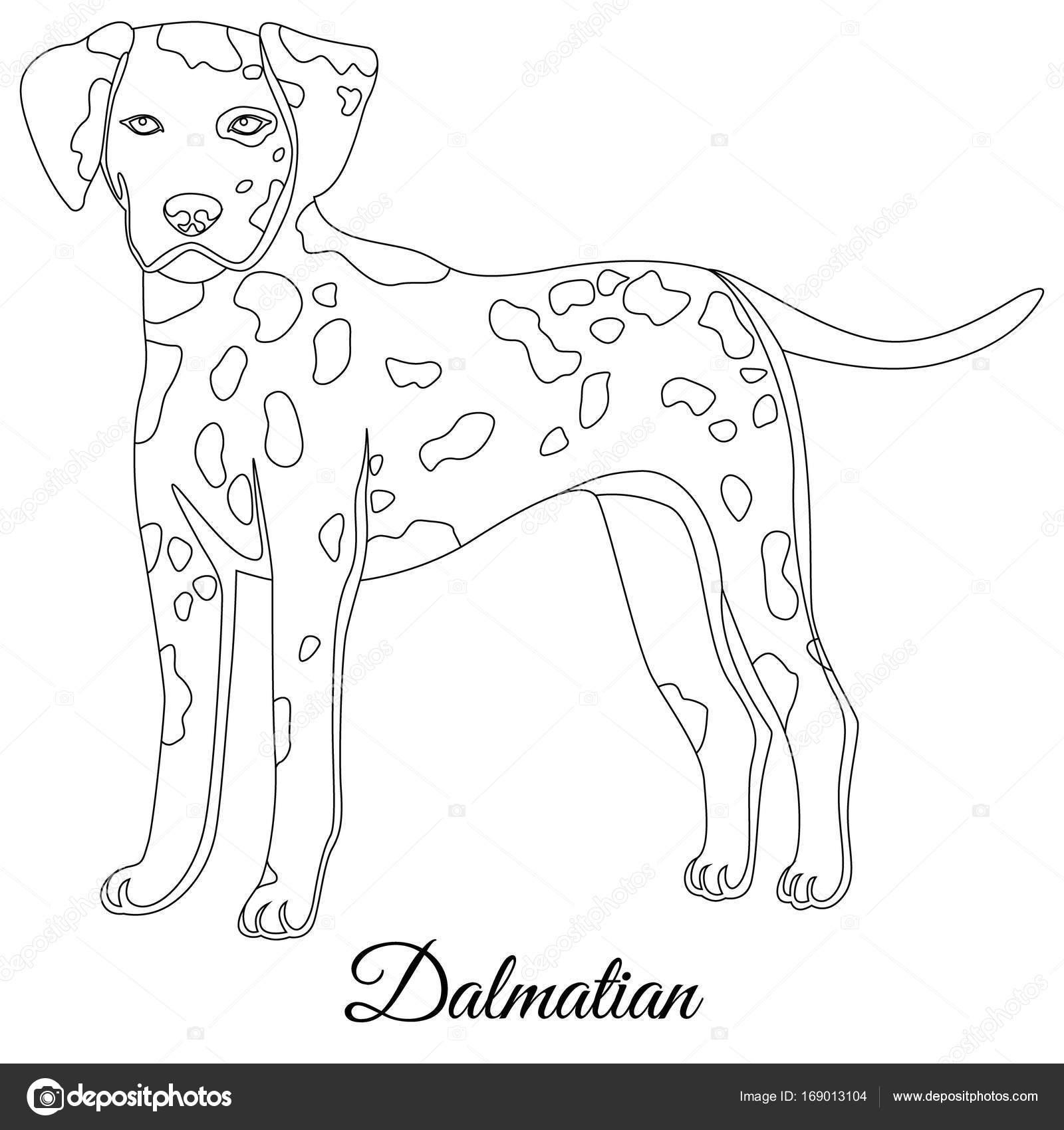 Esquema de perro dálmata — Archivo Imágenes Vectoriales © Marishayu ...