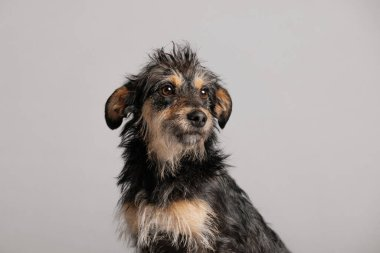 funny portrait of a mixed breed dog in the studio