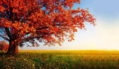 Őszi levelek, a fa háttérkép