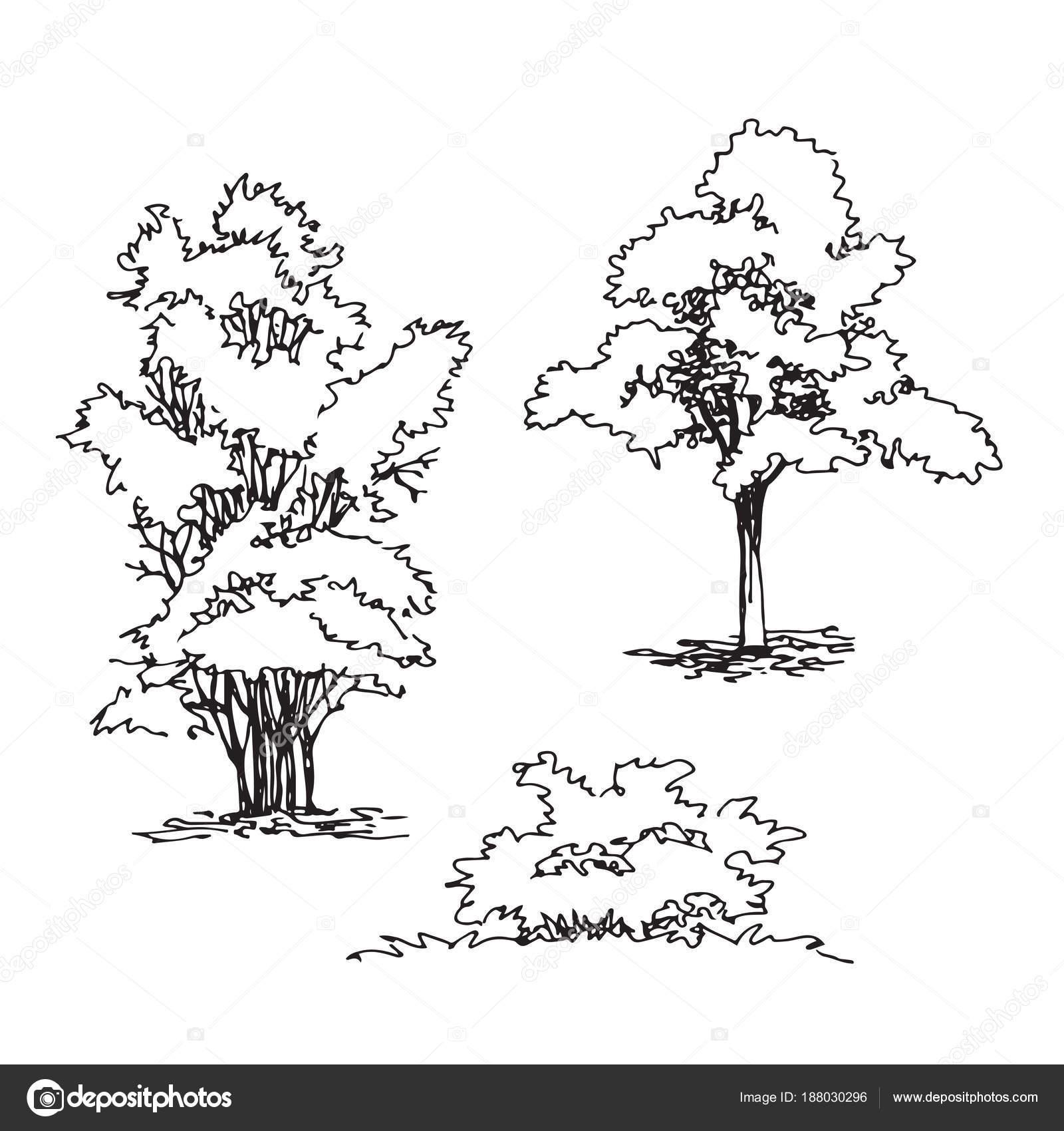 Satz Von Hand Gezeichnete Architekt Baum Und Straucher Silhouette Dendrologische Skizze Sammlung Grafikvorlage Vektor Kancerina