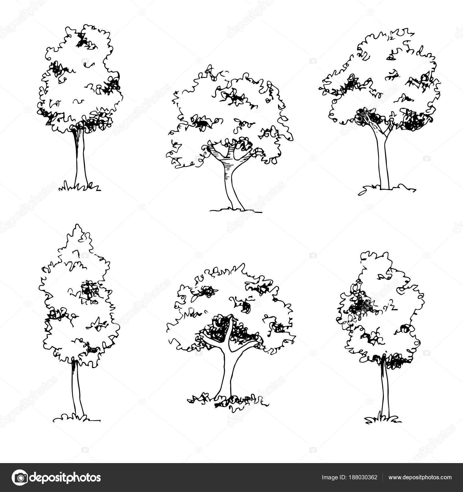 Baum Skizze Architekt Hand Zeichnen Schwarze Landschaft Element Vektor Von Kancerina