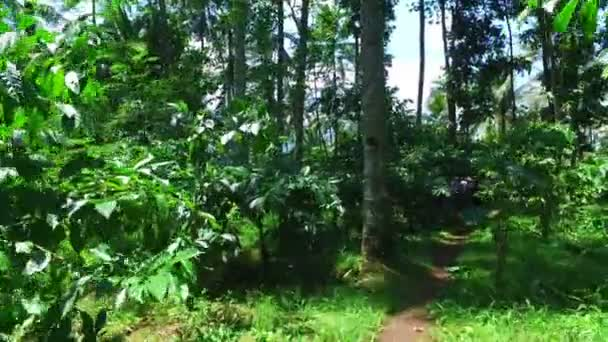 Tropical Garden Java Indonesia — Stock Video © nilaya #181604277