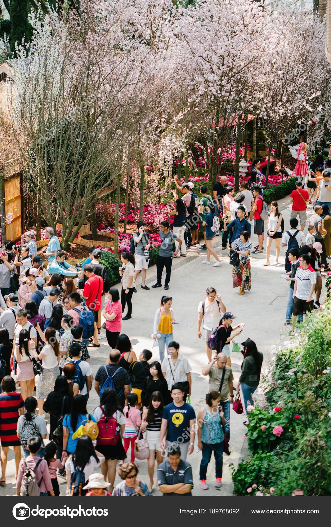 Singapour Mars 2018 Jardins Baie Singapour Importations Sakura