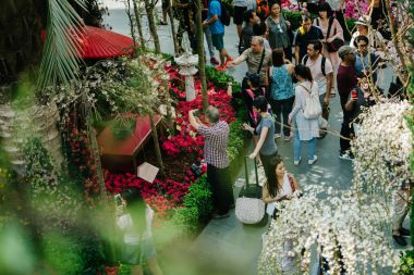 Singapore, March 2018: Gardens by the Bay in Singapore imports sakura blossoms from Japan for the third year running. Singaporeans and tourists flock to the Flower Dome to see the flowers.