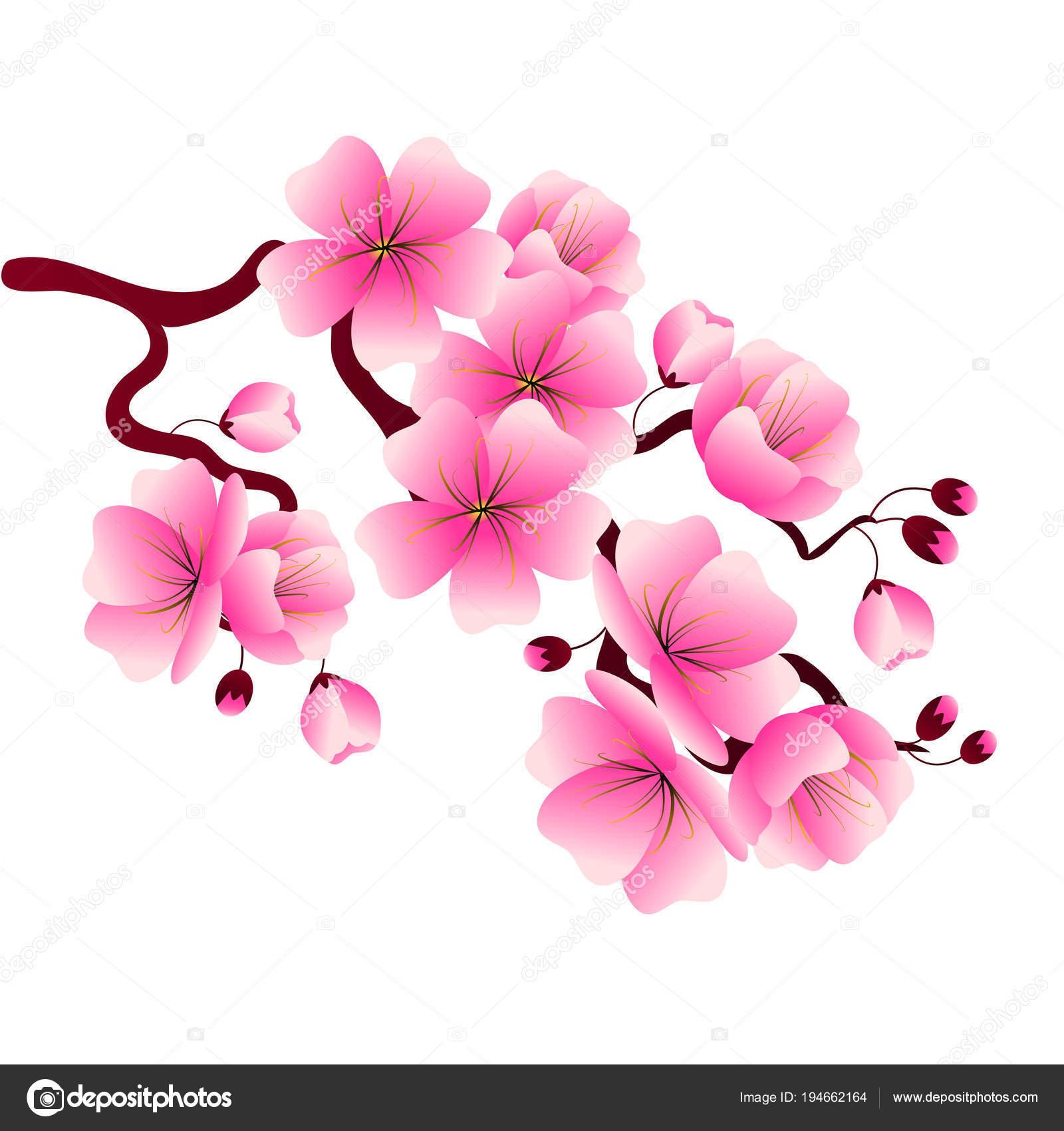 Rama de cerezo con flores de color rosa para la decoración de ...