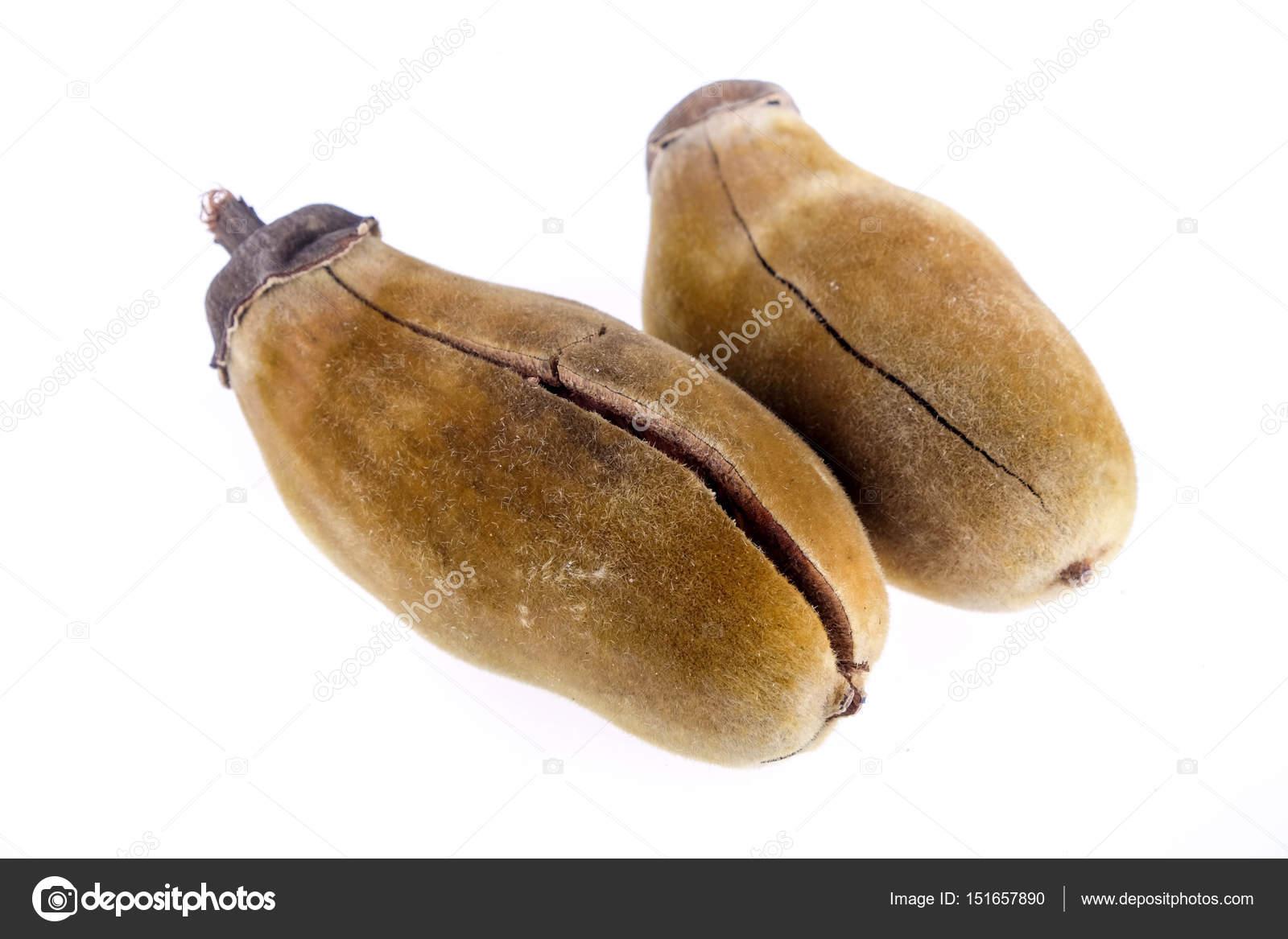 Baobab Frucht Auf Weissem Hintergrund Stockfoto C Nattapol 151657890