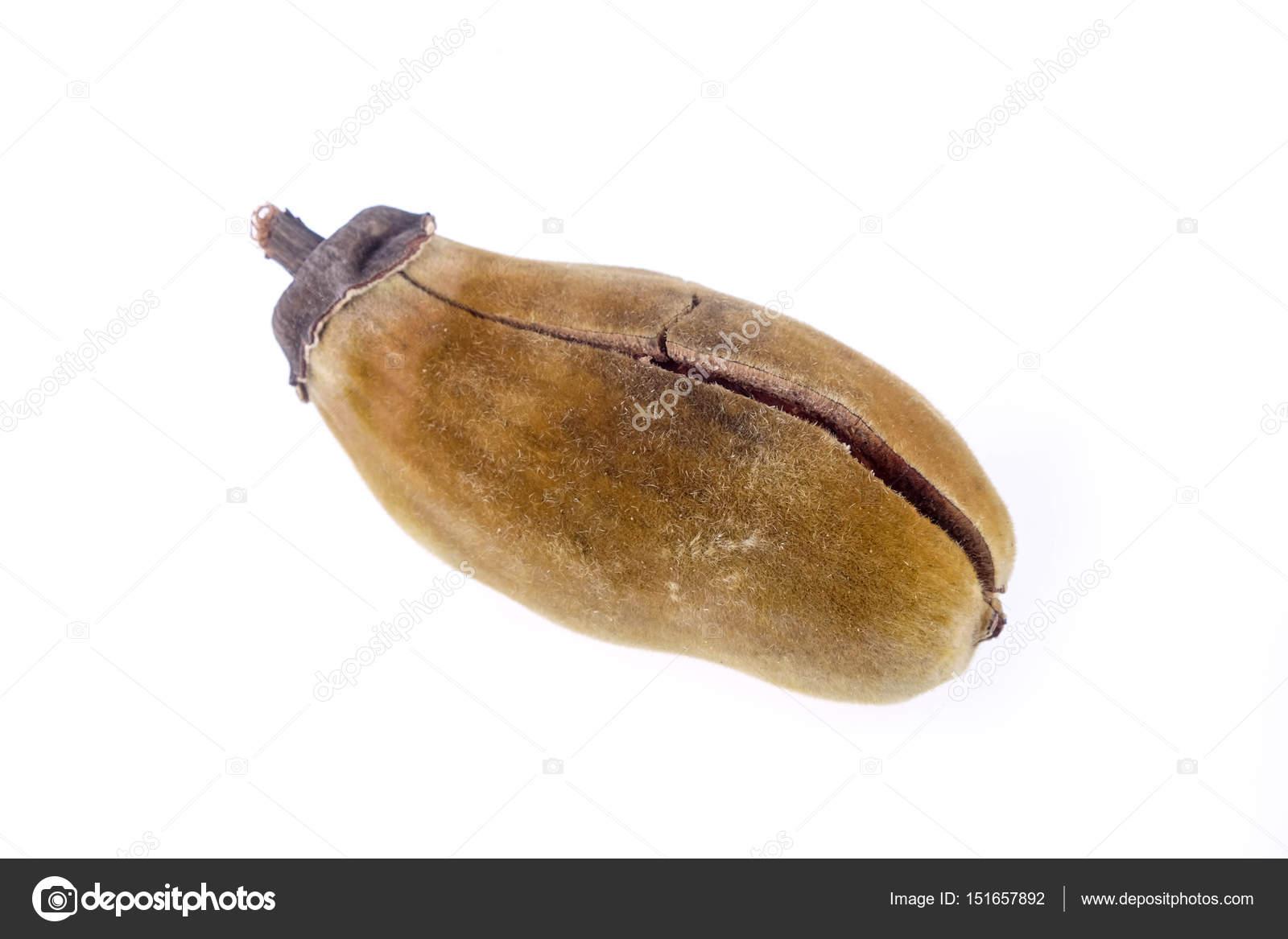 Baobab Frucht Auf Weissem Hintergrund Stockfoto C Nattapol 151657892
