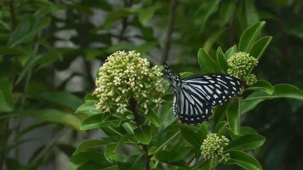 Pillangók repülnek a virág nektár